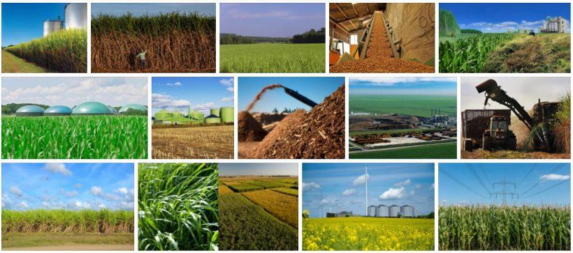 Biomass in Brazil